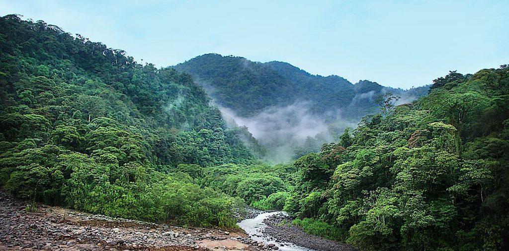 Wilder naturbelassener Dschungel in Costa Rica